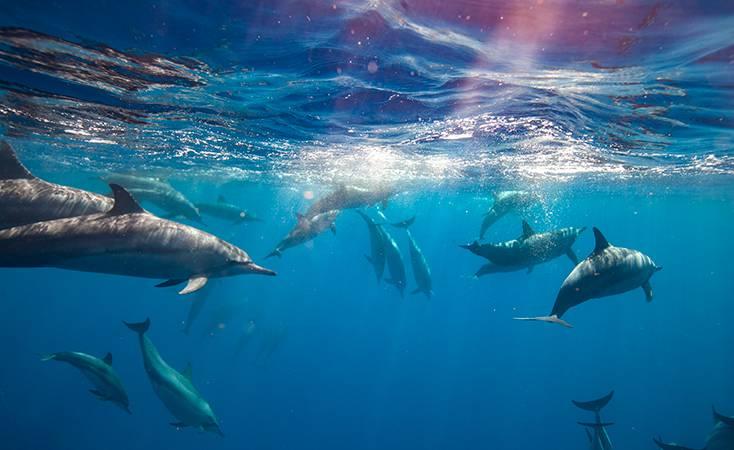 Kona Dolphin Snorkel